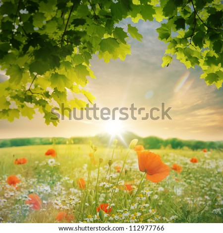 Wild flowers field at sunset