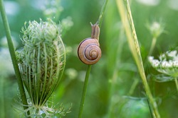 Wild flowers grass and snail in a nature meadow in the rays of summer sun in spring. Close-up macro. Natural summer meadow background. Picturesque colorful art image with soft focus.