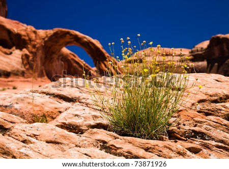 Wild Flowers growing out of a rock with arch in the background
