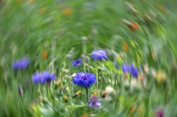 Wild flowers in a grassy meadow, with radial motion blur in the background.