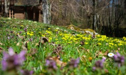 Wild flowers in a nature park, mixed colors photographed in a low angle.