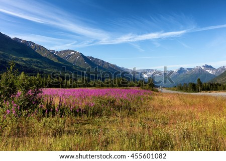 Wild flowers in field with mountains and sky in background.  Denali highway on side of image.  - Shutterstock ID 455601082