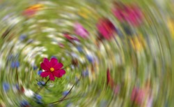 Wild flowers in the grass, with radial motion blur in the background.