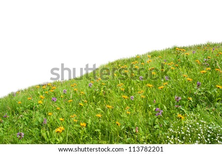 wild flowers in the meadow. meadow on a hillside covered with wild flowers and grass. Isolated over white background