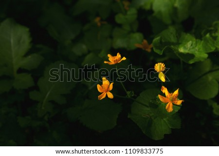 Wild flowers in the sunlight. Dark forest with a beam of light on the flowers #1109833775