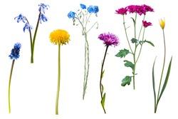 Wild flowers isolated on white background