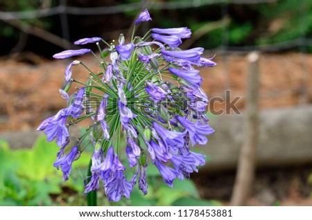 wild flowers macro