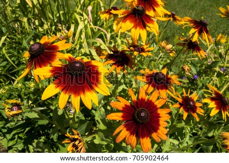 Wild flowers photographed in natural ambient  #705902464