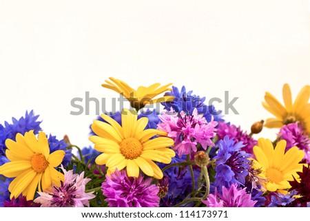 nature, sea, flowers