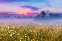 Wild foggy meadow landscape. Summer grassland under sunset or sunrise sky and fog. Misty landscape.