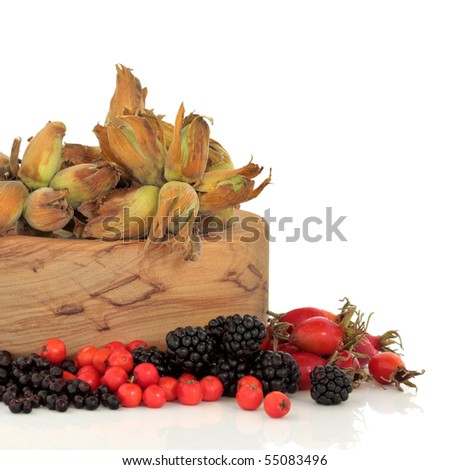 Wild food of autumn of rose hip, elderberry, blackberry and rowan berry with fresh hazelnuts in an olive wood bowl, isolated over white background.