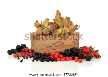 Wild food of autumn of rose hip, elderberry, hawthorn, blackberry, rowan and sloe berry, with  hazelnuts in an olive wood bowl, isolated over white background.