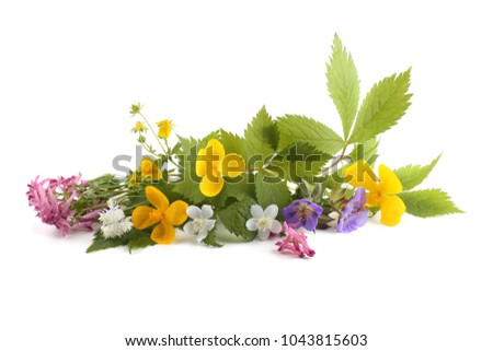 Wild forest flowers, isolated #1043815603