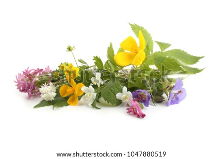 Wild forest flowers isolated on white background. (Spring Far Eastern flowers) #1047880519