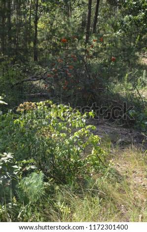 Wild forest wild flowers