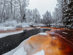 Wild frozen peat river in the winter forest, red river, ice, snow-covered deciduous grove, cloudy day. Lindulovskaya Grove in the Leningrad Region.