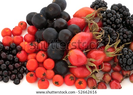 Wild fruit of autumn of rose hip, elderberry, rowan, blackberry and blueberry, isolated over white background. High in antioxidants and vitamin c.