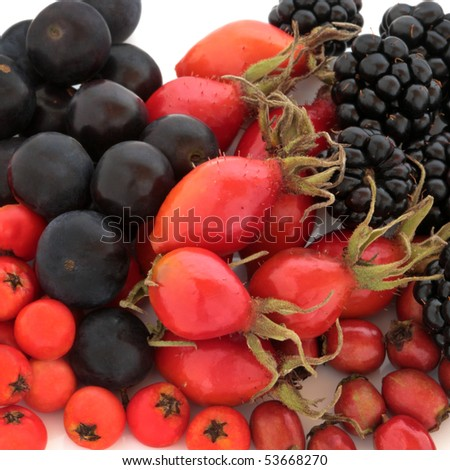 Wild fruit of rosehip , elderberry, rowan berry, blackberry and blueberry, isolated over white background. High in antioxidants.