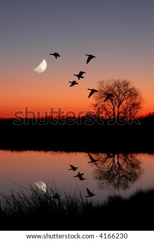 Wild Geese Flying Against Moon at Magic Hour Sunset, Reflected in Peaceful, Still Pond