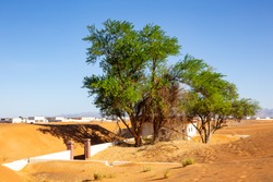 Wild ghaf trees and buried in sand buildings on a sandy desert in Al Madam buried ghost village in United Arab Emirates.