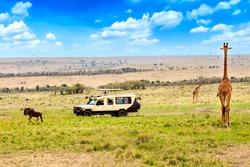 Wild giraffe and wildebeest near safari car in Masai Mara National Park, Kenya. Safari concept. African travel landscape.