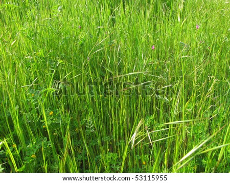 Wild grass mixed with small flowers - stock photo