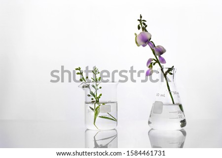 wild green plant and purple flower flask and beaker in biotechnology cosmetic science white laboratory background
