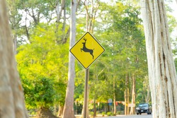 Wild horns animals yellow sign near the road for safety wild life.