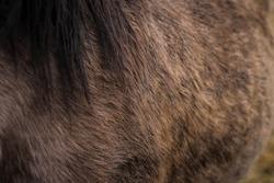 Wild horse fur close photo