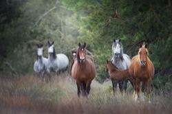 Wild horse herd standing on pasture