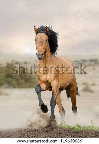 wild horse in prairies