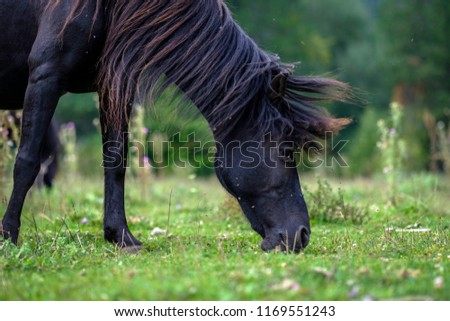 Wild horse in the wild. Wild horse eating meadows Epirus, Greece. #1169551243