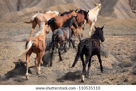 Wild Horse Stampede. The fierce energy of living freely captivated me.