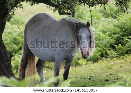 Wild Horse - White Horse Under Tree - Long Mynd Church Stretton #1456158857