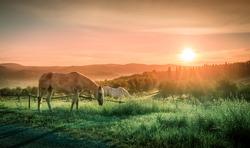 Wild horses and sunrise over tuscan landscape