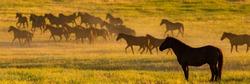Wild horses at dawn on the prairies