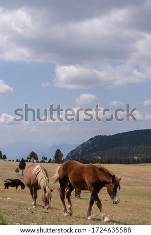 wild horses grazing in the wild