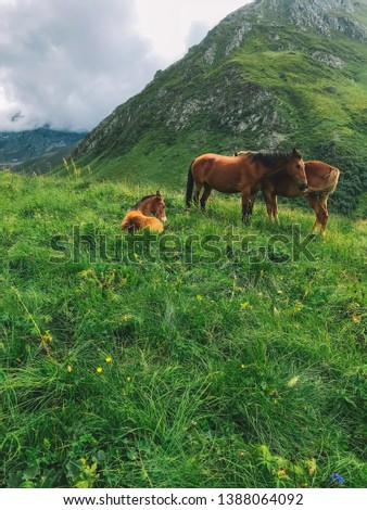 Wild horses in nature, pastures and mountains. mare and cute playful foal in summer mountain pasture.  #1388064092