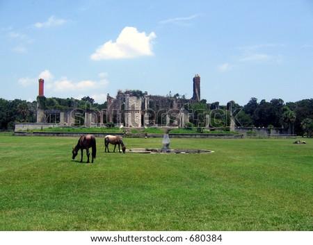 wild horses in ruins