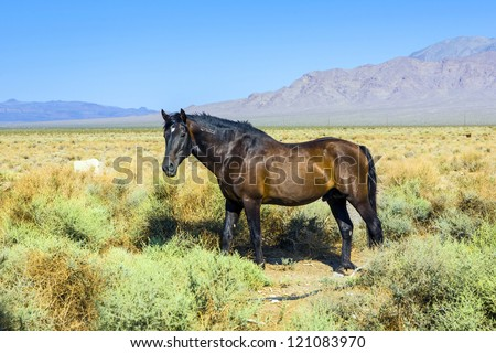 wild horses in the prairie in the old  abandonned small village of Death valley junction,  an old Borax Mining  east of the Death valley