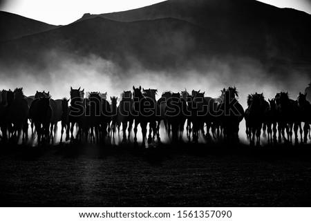 Wild horses living in nature #1561357090