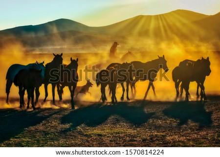 Wild horses living in nature #1570814224