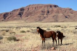 Wild Horses, Namib, Namibia