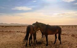 Wild Horses Namibia 3