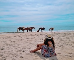 Wild horses of Assateague Island National Seashore