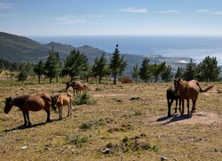 Wild horses on a mountain in northern Spain