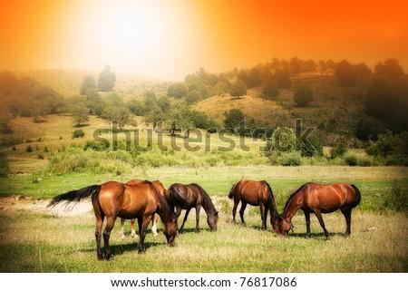 Wild horses on green field and sunny orange sky - stock photo