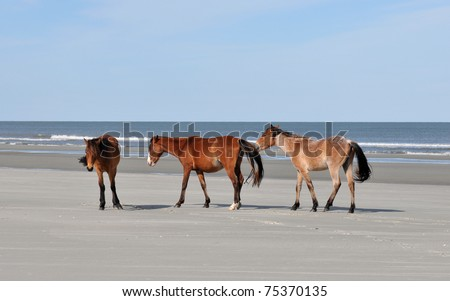 Wild horses on the beach at Cumberland Island, Georgia
