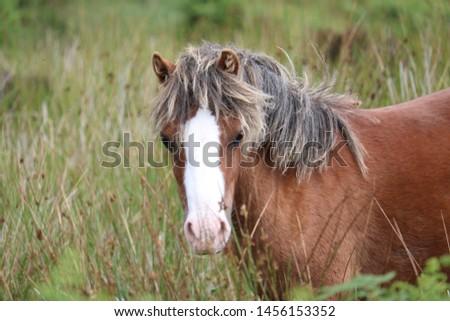Wild Horses on the Long Mynd near Church Stretton #1456153352