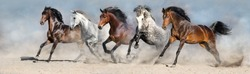 Wild horses run in  desert dust against blue sky